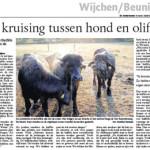 artikel gelderlander 2008 media