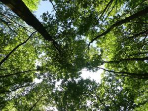 Camping de Muk bos en meer (43)