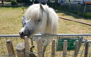 Pony en geit Camping de Muk Winssen