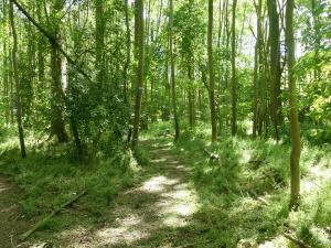 Camping de Muk bos en meer (20)